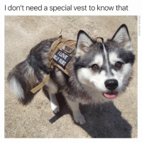 Funny, Specials, and Donte: I don't need a special vest to know that Roll over bb
