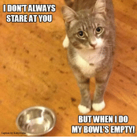 """Don't make me use my """"stink eye""""!: I DONTAIWAYS  STAREAT YOU  Caption by Kittyworks  BUT WHEN IDO  MY BOWLS EMPTY! Don't make me use my """"stink eye""""!"""