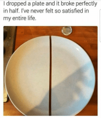Memes, 🤖, and Kawaii: I dropped a plate and it broke perfectly  in half. I've never felt so satisfied in  my entire life. wow 😂😍 ♥ ☀️| QOTP : favorite band? ♥ 🐾| Tags : meme memes clean cleanmeme cleanmemes lol lolol ha haha omg dying crying laughing laugh laughoutloud goofy hilarious wow kawaii kawaiimemeteam relatable joke jokes kawaiimeme