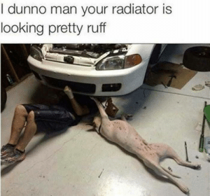 Dank, Memes, and Target: I dunno man your radiator is  looking pretty ruff Ill show myself out by Alley_9494 MORE MEMES