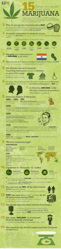 "15 Things you should know about Marijuana Assunto Polêmico ... =/: I E  15  MARIJUANA  Things you should  know about  Stwistically speaking you or someone you knmow bas probabty used marjuana as a  secroasonal drug at leaat once Did you lnow there's mose to tho pot plant than a melow  high? The plant has actually beon used in America snoo ita loundingbut not to got high  Read on to ind thore about this special weed  1.  .Why do you get the munchies when HIGH?  The active ingredient THC inhibits a cannabinoid receptor known as CB1  This receptor is aloo involved in signaling the appetite-supressing hormone  Leptin When CBI is blocked Leptin doesn't get activated  It's nearly impossible to overdose on pot.  It takes more than 800 joints to kill a person and they would die from carbon monoxide poisoning  not THC  ANNUAL NUMBER OF DEATHS BY DRUG  85,000  5,800 buprofin2,390  2,147  rugs  18,675  Paraguay is the largest producer  of MARIJUANA in the world  Marijuana was first used as a medical treatment in China in 1737.  It was used to ease the pain of rheumatisn and gout  5. The first law issued in America  regarding marijuana required farmers  to grow it for hemp.  Colonies gren the hemp plant for  clothing sails ad rope.  6. George Washington and Thomas Jefferson both owned  hemp farms. Jefferson drated the Declaration of Independence on HEMP paper  7. In America, MARIJUANA is the  #4 value crop and generates a  $36 billion market.  . American History of Marijuana  1600s 1800s 1907  Production of hempPure Food and Drug Act requires that all  is encourageddankantisne e aueter producta  products, like over-the-counter  Because of the Great Depression rising unemployment and the association of  uana with Mexican immigrants, the govermment begins to view marijuana as a  problem. 29 states outlaw marijuana by 1939.  1940s  Reports and studies show that marijuana is  significantly less dangerous than previously  suspected, proving no link between pot and  violence, sex crimes,  insanity or addiction.  1970s  In 1972, the Shafer Commission recommends that personal use of MARIJUANA be  de  decriminalized marijuana and nearly all of the states reduced  penalties associated with marijuana  Nixon rejects this  In response, 11 states  California legalizes the use of MEDICAL MARIJUANA for patients suffering various  diseases such as AIDS  Where is marijuana legal?  DECRIMINALIZED  Australia  Czech Republic Ecuador  Macedonia  Venezuela  Canada (for medical use)  Chile  Finland  Mexico  Netherlands Portugal  entine (for personal use in small amounts)  Indía (government regulated)  ran  to grow but illegal to consume  Peru  10. Cigarettes vs. Marijuana vs. Coffee  Coffee  16  Studies show that smoking MARIJUANA even heavily does not increase your  risk for lung cancer  have a 90% addiction rate, while marijuana is even less  addictive than coffee.  11. You can only get HIGH off the dried leaves  of the female plant.  Male plants are only used for fertilizing a female plant  12. WEED was used as a truth serum by the  US government during WWII  It was spiked in cigarettes and given to detainees  to have them release intelligence,  S You should vaporize weed instead of smoking it  A vaporizer heats up weed to near boiling  releasing THC but not burning the weed,  so you can get HIGH without inhaling harmful smoke  14. The name MARIJUANA"" is of unknown  Mexican Spanish etymology  It replaced""canmabis and hemp in the 1930s.  15. The record for the world's largest joint had 100 grams  of weed in it 15 Things you should know about Marijuana Assunto Polêmico ... =/"