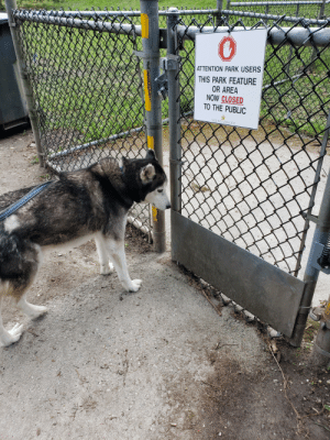 I explained why the dog park was closed but he was still sad.: I explained why the dog park was closed but he was still sad.