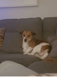 Funny, Been, and Dog: I farted and my dog moved to the far side of the sofa and has been looking at me like this since via /r/funny https://ift.tt/2RLjKaa