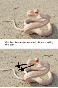 <p>Bad Joke Snake.</p>: I feel like this snake just told a bad joke and is waiting  for a laugh  ее <p>Bad Joke Snake.</p>