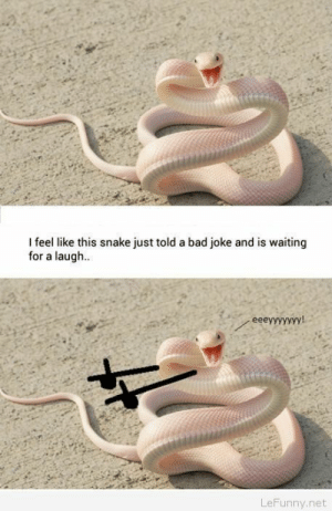 Funny snake meme picture: I feel like this snake just told a bad joke and is waiting  for a laugh  LeFunny.net Funny snake meme picture