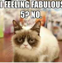 Hope your 5th birthday is as dreadful as you expect @realgrumpycat! For only being 5, you have had quite a journey. Thanks for sharing your purr-ecious memories with @Friskies. Like or comment to wish Grumpy Cat an awful birthday. partner: I FEELING FABULOUS  58 N0, Hope your 5th birthday is as dreadful as you expect @realgrumpycat! For only being 5, you have had quite a journey. Thanks for sharing your purr-ecious memories with @Friskies. Like or comment to wish Grumpy Cat an awful birthday. partner