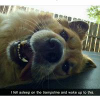 Memes, Puppies, and Social Media: I fell asleep on the trampoline and woke up to this Wat in tarnation is u doin' (@funpawcare) Go to my website www.funpawcare.com for free expert cat and dog training, behavior, nutrition and pet care articles and sign up for our newsletter and blog, link in bio. All social media pages are current and listed on website venice venicebeach la cali california losangeles santamonica malibu socal manhattanbeach marinadelmar culvercity beverlyhills southbay westside westwood sawtelle marinadelrey encino vannuys westla marvista pacificpalisades shermanoaks dogtraining puppylove doglover puppies puppy pupper