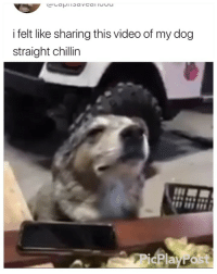 Video, Girl Memes, and Dog: i felt like sharing this video of my dog  straight chillin  PicPlayPost 😂😂😂😂😂