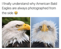 Dank, My Nigga, and Eagle: I finally understand why American Bald  Eagles are always photographed from  the side Lmao bruh I just notice this look at my nigga on the right look like he just got the best pussy of his life ⬇️⬇️⬇️ Follow @icecoldsavage for more
