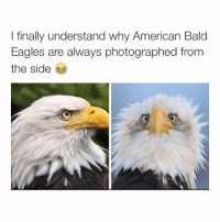 Finals, Good Morning, and American: I finally understand why American Bald  Eagles are always photographed from  the side good morning, I slept so good