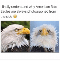 Memes, 🤖, and Americans: I finally understand why American Bald  Eagles are always photographed from  the side Holy shit it just went from American freedom fighter who ejaculates lightning bolts to a nerdy Jewish guy named Arthur who is friends with my dad, just by turning it's head. (@federline4real)