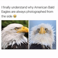 Finals, Wow, and American: I finally understand why American Bald  Eagles are always photographed from  the side Wow