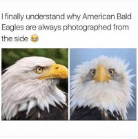 Philadelphia Eagles, Funny, and Meme: I finally understand why American Bald  Eagles are always photographed from  the side (@sonnny5ideup) is amazing at memes!