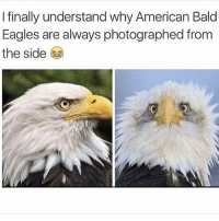 I want a pet glad eagle: I finally understand why American Bald  Eagles are always photographed from  the side I want a pet glad eagle