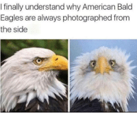 Philadelphia Eagles, Memes, and American: I finally understand why American Bald  Eagles are always photographed from  the side