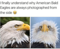Philadelphia Eagles, American, and Why: I finally understand why American Bald  Eagles are always photographed from  the side <p>&lsquo;mUrICa 🇨🇦🇲🇽🇨🇦</p>