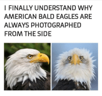 Philadelphia Eagles, American, and Why: I FINALLY UNDERSTAND WHY  AMERICAN BALD EAGLES ARE  ALWAYS PHOTOGRAPHED  FROM THE SIDE Not very intimidating