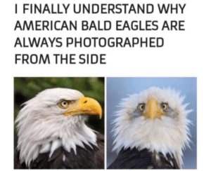 Philadelphia Eagles, American, and Best: I FINALLY UNDERSTAND WHY  AMERICAN BALD EAGLES ARE  ALWAYS PHOTOGRAPHED  FROM THE SIDE We all have our best side.