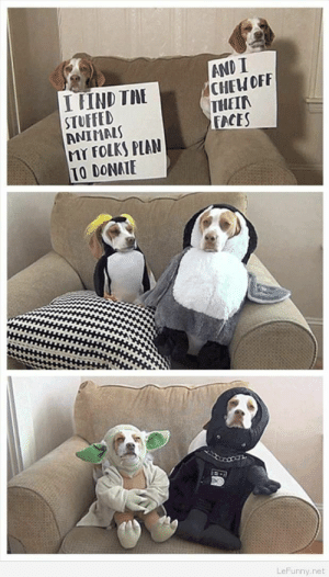 Animals, Dogs, and Funny: I FIND TME  STUFFED  ANIMALS  MY FOLKS PIAN  TO DONAIE  AND I  CHEW OFF  THEIR  FACES  LeFunny.net Funny dogs pets with shame notes