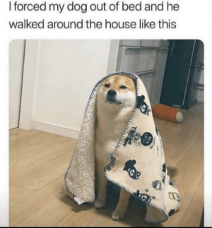 memehumor:  Relatable doggo: I forced my dog out of bed and he  walked around the house like this  LATT  THEE memehumor:  Relatable doggo
