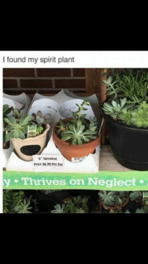 "Spirit, Irl, and Me IRL: I found my spirit plant  6"" Succulent  Price $6.99 Per Po  y Thrives on Neglect. Me IRL"