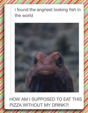 Pizza, Tumblr, and Blog: i found the angriest looking fish in  the world  HOW AM I SUPPOSED TO EAT THIS  PIZZA WITHOUT MY DRINK?! lolzandtrollz:  The Angriest Looking Fish In The World