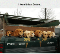 Costco, Doge, and Tumblr: I found this at Costco.  DOGE  4X4 lolzandtrollz:  The Truck Of Happiness