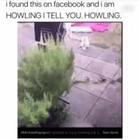 Crazy, Facebook, and Memes: i found this on facebook and i am  HOWLING I TELL YOU. HOWLING  #Michae!Rapaport spotted a crazy looking cat a  See More Wtf 💀 @thehoodtube