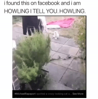 Crazy, Facebook, and Memes: i found this on facebook and i am  HOWLING I TELL YOU. HOWLING  #MichaelRapaport spotted a crazy looking cat a… See More Sound on🔊😂😂😂 ( DM to a friend and we'll accept his-her follow request rightaway ✌🏼 ) Repost: @barrysbanterbus