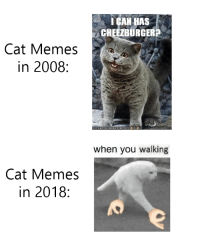 "Meme, Memes, and Evolution: I GAN HAS  CHEEZBURGERS  Cat Memes  in 2008:  CANHASCHEE2BURGER.COM  when you walking  Cat Memes  in 2018: <p>Cat Meme Evolution via /r/memes <a href=""http://ift.tt/2DNtRDS"">http://ift.tt/2DNtRDS</a></p>"