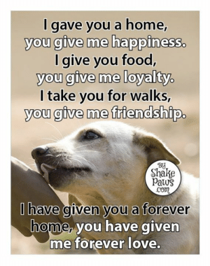 Our dogs give us so much love ❤️ www.shakepaws.com: I gave you a home,  you give me happiness.  I give you food,  you give me loyalty.  I take you for walks,  you give me friendship.  By  Shake  Paws  Com  Ihave given you a forever  home, you have given  me forever love. Our dogs give us so much love ❤️ www.shakepaws.com