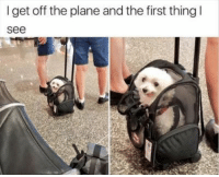Net, Pics, and Plane: I get off the plane and the first thing  see 27 Of The Funniest Pics On The Net