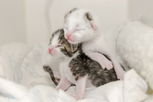 Humane Society, Kitten, and Society: I get to be a photographer at the Humane Society neonatal kitten nursery