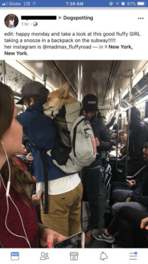 Corgi, Instagram, and New York: ../i Globe LTE  7:39 AM  Dogspotting  İhr.  edit: happy monday and take a look at this good fluffy GIRL  taking a snooze in a backpack on the subway!!!!  her instagram is @madmax fluffyroad-in New York,  New York. corgikistan:  sleeping fluffy corgi on the subway