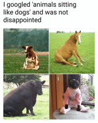 Animals, Disappointed, and Dogs: I googled 'animals sitting  like dogs and was not  disappointed  Sarcastic. Tendences  castic Téndencie All the animals enjoyed doing this simple task, all except the cat, the cat is an asshole