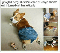 Corgi, Memes, and Butterfly: I googled 'corgi shorts' instead of 'cargo shorts  and it turned out fantastically Follow me @antisocialtv @lola_the_ladypug @x__social_butterfly__x @x__antisocial_butterfly__x