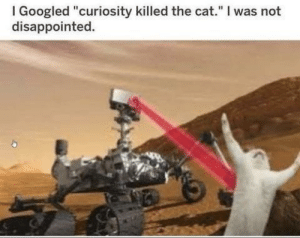 "Curiosity is a dangerous thing folks by haskellogy MORE MEMES: I Googled ""curiosity killed the cat."" I was not  disappointed. Curiosity is a dangerous thing folks by haskellogy MORE MEMES"