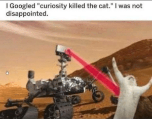 "Ah yes curiosity: I Googled ""curiosity killed the cat."" I was not  disappointed. Ah yes curiosity"