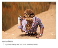 Hot to thot... Follow me ( @god.of.appleysauce )for more funny tumblr and textpost: i googled sassy bird and i was not disappointed Hot to thot... Follow me ( @god.of.appleysauce )for more funny tumblr and textpost