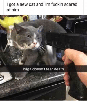 Dank, Memes, and Target: I got a new cat and I'm fuckin scared  of him  Niga doesn't fear death We Fear The Unknown by Behlaky MORE MEMES