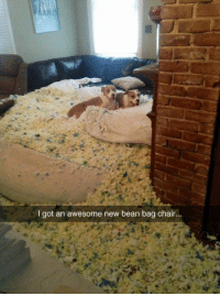 Marvelous 25 Best Bean Bag Memes I Need This Memes And Memes Caraccident5 Cool Chair Designs And Ideas Caraccident5Info