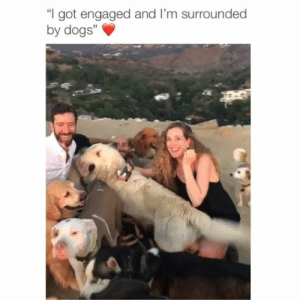 """Dogs, Memes, and 🤖: I got engaged and I'm surrounded  by dogs""""  3 This guy wins 😂 Credit: @lastamp w- @rebeccayale"""
