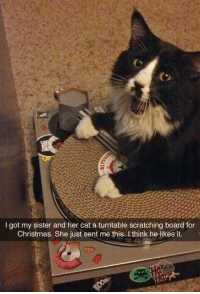 Christmas, Board, and Got: I got my sister and her cat a turntable scratching board for  Christmas. She just sent me this. I think he likesit (photo via eternalpancakes)