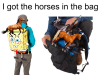 got: I got the horses in the bag