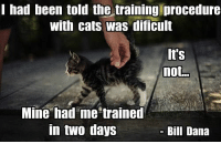 Cats, Love, and Been: I had been told the training procedure  with cats was dificul  It's  not..  Mine had me trained  in two days  Bill Dana Don't you just love your little kitty?