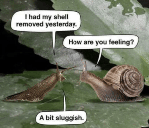 Man, This subbreddit is exactly what it sounds like...: I had my shell  removed yesterday  How are you feeling?  A bit sluggish. Man, This subbreddit is exactly what it sounds like...