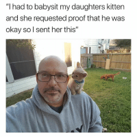 "Cute, Funny, and Memes: ""I had to babysit my daughters kitten  and she requested proof that he was  okay so l sent her this"" Follow me @hilarious.ted for more cute memes. Credits (u-MacSteele13)"