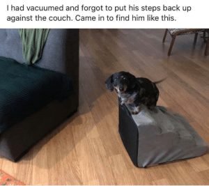 Funny Random Meme Dump: I had vacuumed and forgot to put his steps back up  against the couch. Came in to find him like this. Funny Random Meme Dump
