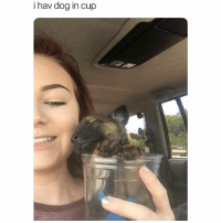 Funny, Dog, and Cuteness: i hav dog in cup Overdose of cuteness (tw-hxnlxne)