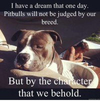 I have a dream...  BAN BSL WORLDWIDE!: I have a dream that one day  Pitbulls will not be judged by our  breed  But by the character  that we behold  quick meme com I have a dream...  BAN BSL WORLDWIDE!